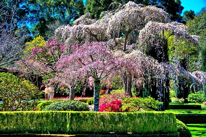 Filoli gardens hours home design ideas and pictures for Filoli garden pool